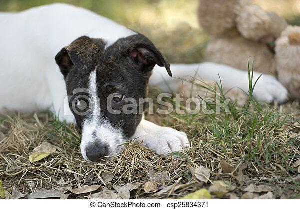 Sad Puppy Dog Eyes Lying Down A Sad Eyed Looking Dod Is Lying Down