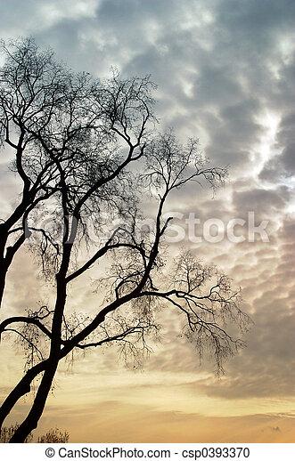 Sad tree - csp0393370
