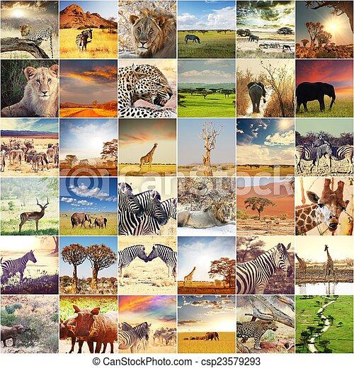 safari, afričan - csp23579293