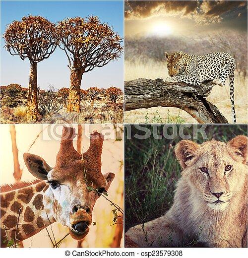 safari, afričan - csp23579308