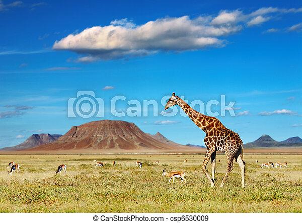 safari, africano - csp6530009