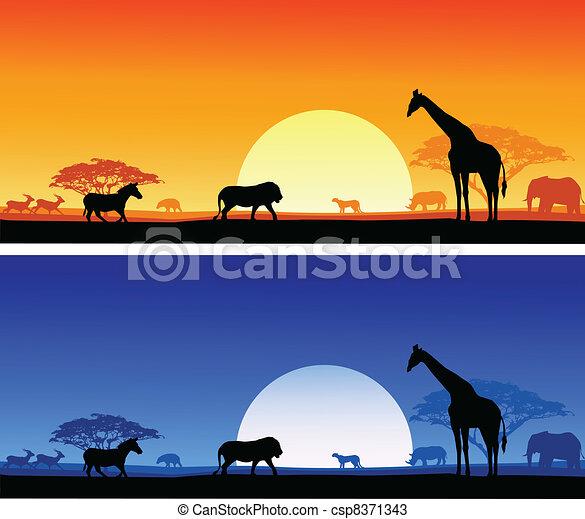 Safari background - csp8371343