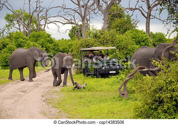 safari(botswana), 코끼리 - csp14383506