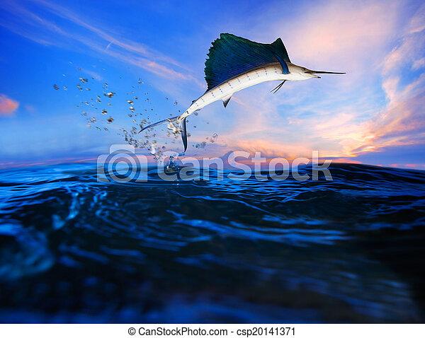 sailfish flying over blue sea ocean - csp20141371