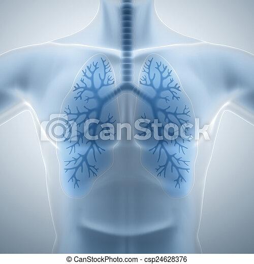 sain, propre, poumons - csp24628376