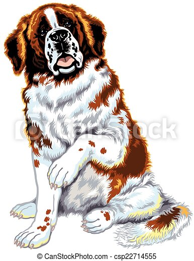 saint bernard dog dog saint bernard breed sitting pose front view