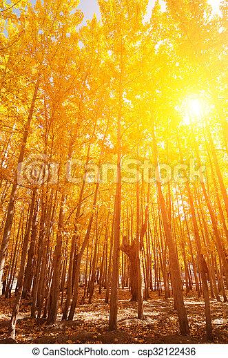 saisons, tremble, arbres, automne - csp32122436
