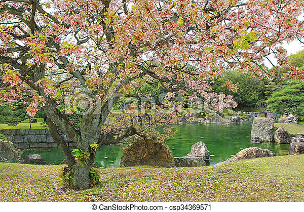 Sakura blossoming at Ninomaru Garden at Nijo Castle during spring in Kyoto, Japan - csp34369571