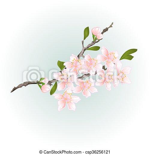 Sakura cherry branch with flowers vector - csp36256121