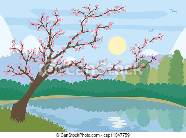 Sakura - csp11347759