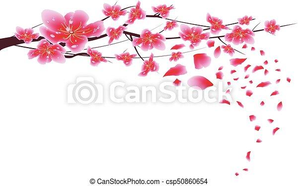 Sakura Flowers Background Cherry Blossom Isolated White Chinese New Year
