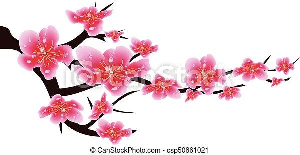 Sakura Flowers Background Cherry Blossom Isolated White Chinese New Year 201881