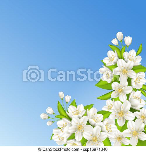Sakura on the background of blue sky - csp16971340