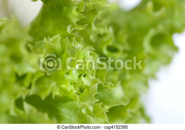Salad leaves - csp4152395