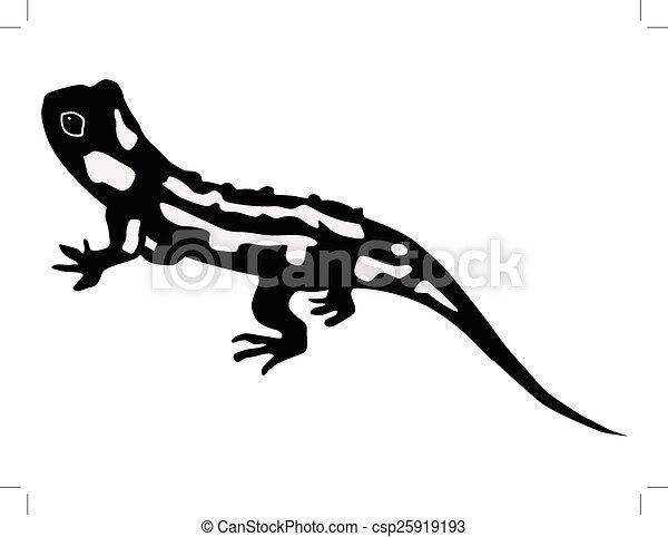 Dessin Salamandre silhouette, salamandre.