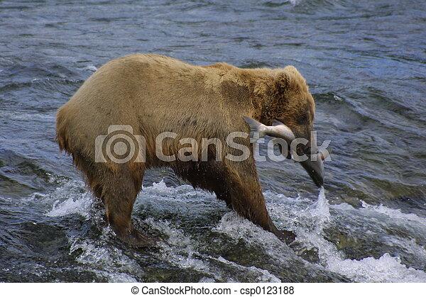 Oso y salmón - csp0123188