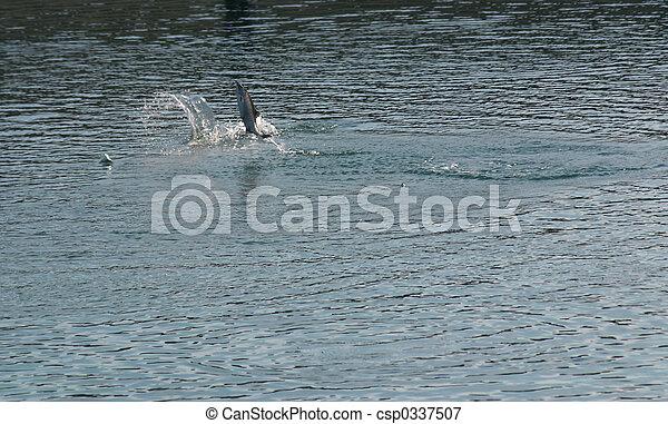 Salmon Fishing - csp0337507