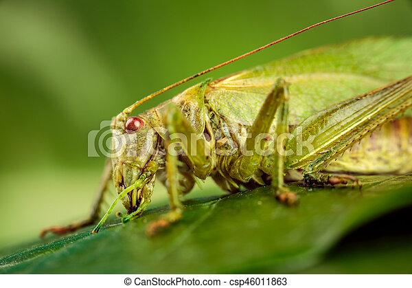 Saltamontes en un fondo verde - csp46011863