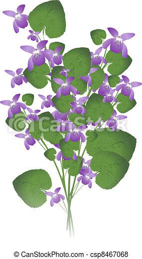 Violeta salvaje - csp8467068