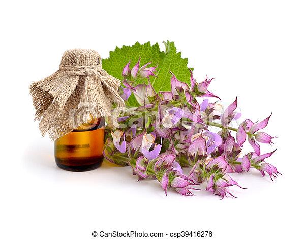 Salvia sclarea, clary, or clary sage - csp39416278
