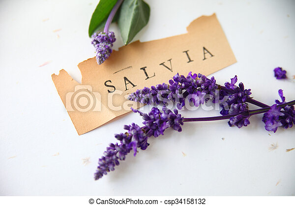 Salvia word with flowers - csp34158132