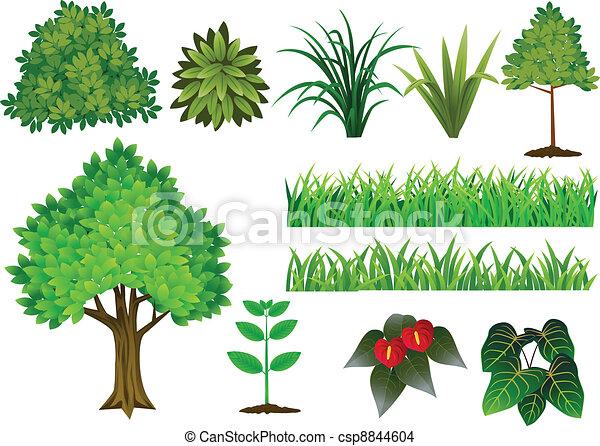Pflanze und Baumsammlung - csp8844604