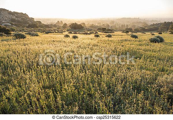 San Fernando Valley Fiddleneck Wildflower Meadow - csp25315622