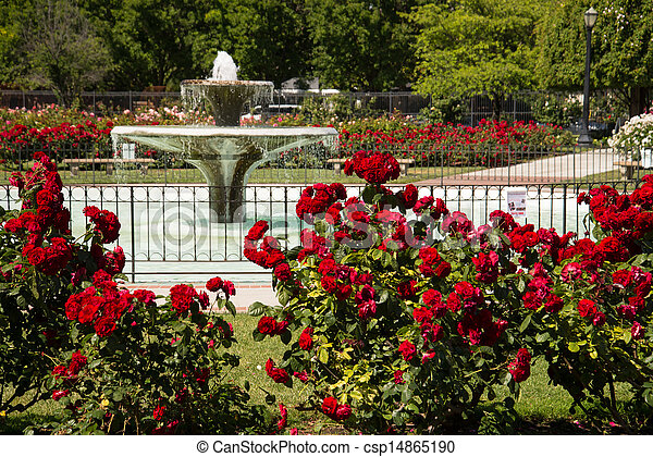 San Jose Rose Garden Landscape Of Fountain Surrounded By