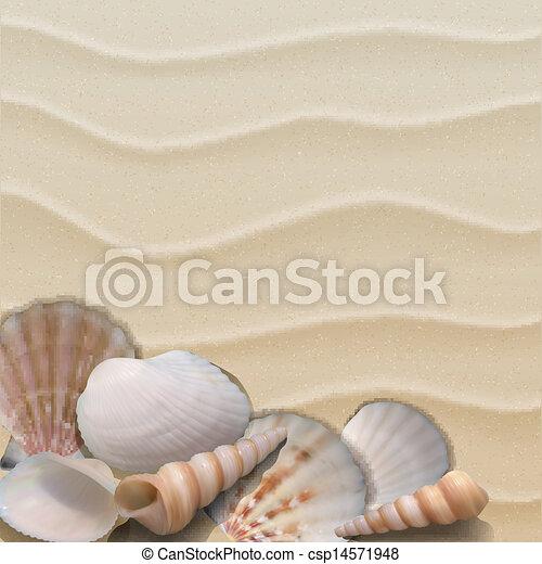sand., 海洋, 背景, 貝殻 - csp14571948