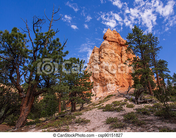 Sand and Stone Formations with Blue Sky and Green Trees in Bryce Canyon National Park, Utah, USA - csp90151827