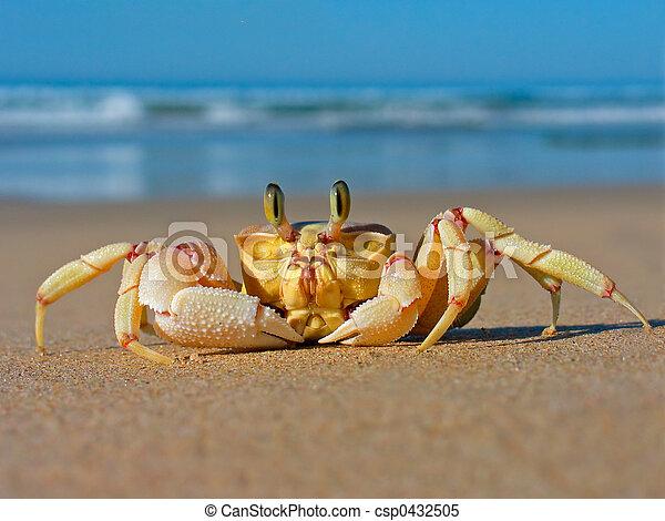 Sand crab - csp0432505