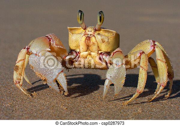 Sand crab - csp0287973