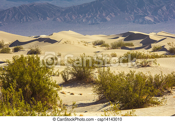Sand Dunes in the Morning - csp14143010