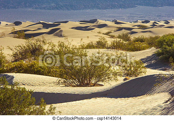 Sand Dunes in the Morning - csp14143014