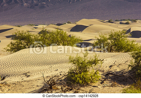 Sand Dunes in the Morning - csp14142928