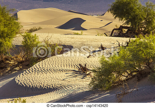 Sand Dunes in the Morning - csp14143420