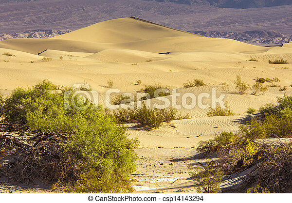 Sand Dunes in the Morning - csp14143294