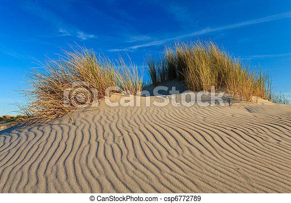 Sand dunes with helmet grass - csp6772789