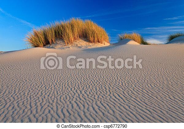 Sand dunes with helmet grass - csp6772790