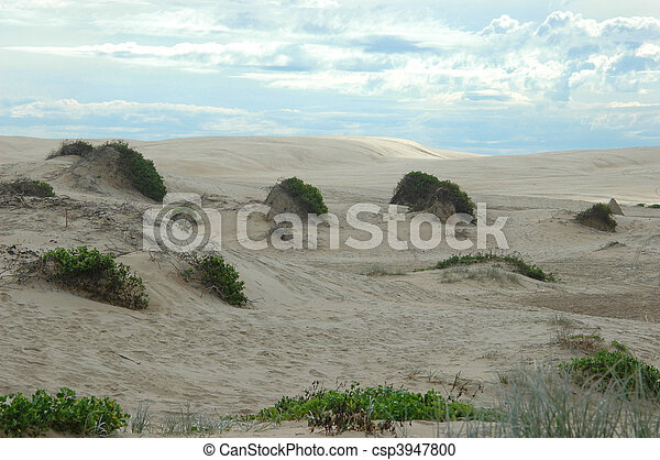 Sand-dunes with patchy grass - csp3947800