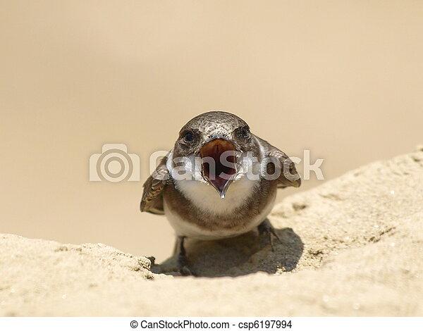Sand Martin, swallow, riparia  - csp6197994