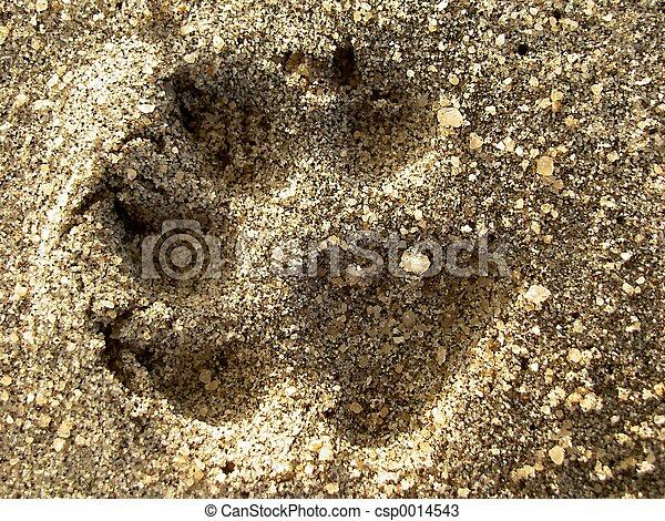 Sand - csp0014543