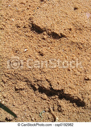 sandy-red, sporcizia - csp0192982