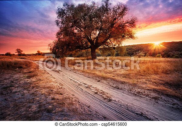 Sandy road next to tree under dramatic sky - csp54615600