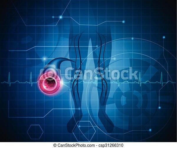 sano, arteria, fondo, gamba - csp31266310