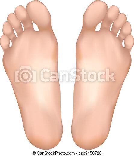 Sano feet sano vettore illustration feet vettore di for Piani di casa di 3600 piedi quadrati