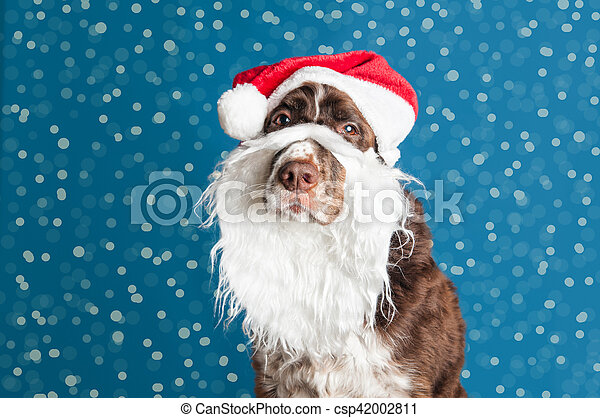 74a9330e39afe Santa dog. Dog wearing a santa hat and beard.