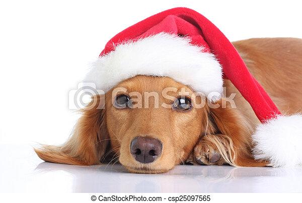 Santa dog - csp25097565