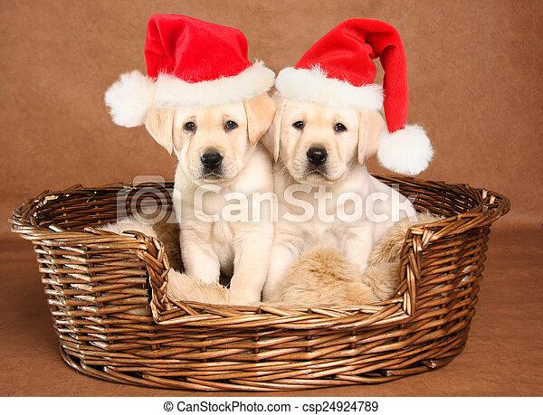 Christmas Puppies.Santa Puppies