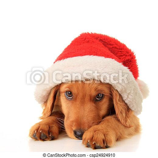 Santa puppy - csp24924910